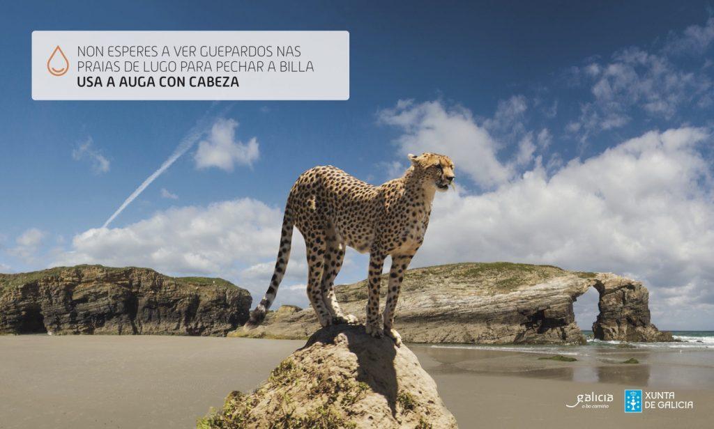 Non esperes a ver guepardos nas praias de Lugo para pechar a billa. Usa a auga con cabeza.